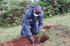 World Marathon record holder Eliud Kipchoge plants a tree at Kaptagat Forest to mark the 4th annual Sabor Forest tree planting event.