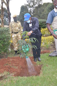 President of Ruiru Rotary club Mr. Mburu Machua waters a tree seedling at Aberdare National Park headquarters at Mweiga town, Nyeri County during the launch of a tree planting campaign in the region