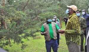 The PS inspecting  the 100 ha KEFRI experimental site for Pine, Eucalyptus and Cypress at the Kamara forest block, Kericho County, that specializes in plant experiment and seeds production