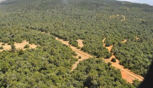 An aerial view of the expansive Mukogodo forest in Laikipia North.