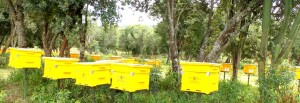 Bee Hives delivered to the Naramat Community Forest Association in Kirisia Forest