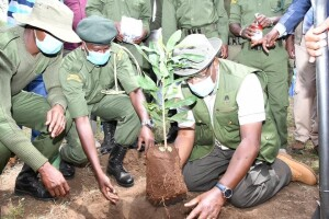 Environment CS Keriako Tobiko plants a tree at Ilekulnyeti Primary school in Kajiado County in commemoration of the International Day of Biological Diversity, the CS urged area residents to plant more trees to increase the County's tree cover towards achieving the national 10% forest cover.